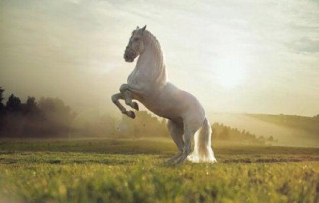 Koń - silna osobowość