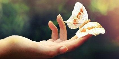 Motyl w dłoni