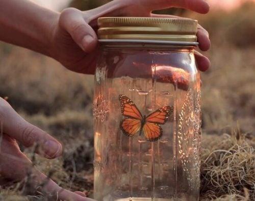 Motyl w słoiku