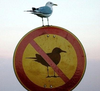 Ptak na zakazie