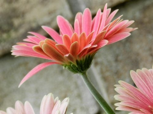Kwiat symbolizujący poczucie własnej wartości