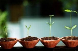 Rośliny - rozwój