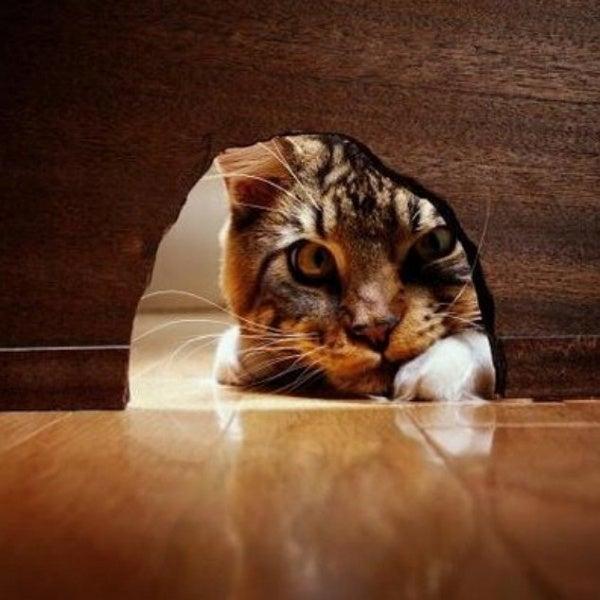 Ciekawość nie zabija kota, ale dodaje mu sił