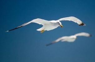 Ptaki i niepowodzenia