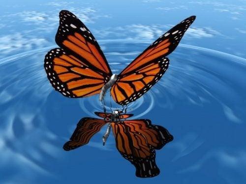 Motyl na powierzchni wody