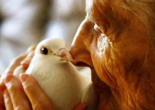 Staruszek trzymający białego gołębia
