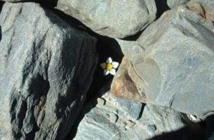 Kwiat w skałach