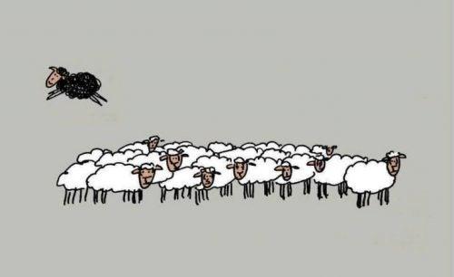 Czarna owca nie jest zła, jest po prostu inna