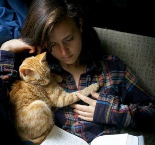 Koci towarzysz