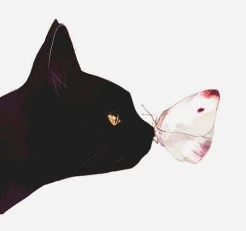 Kot i motyl