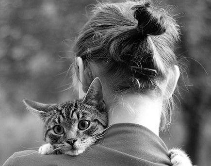 Kot na ramieniu