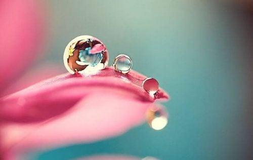 Krople spływające z liścia