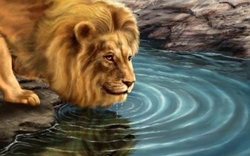 Lew i jego odbicie w lustrze wody