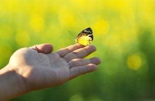 Motyl - odmień swoje życie