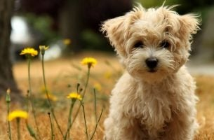 Psy są naszymi przyjaciółmi