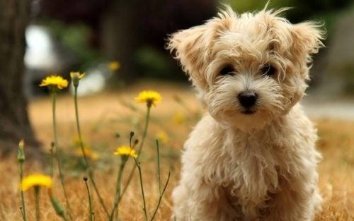 Psy nie umierają, lecz zasypiają w naszych sercach