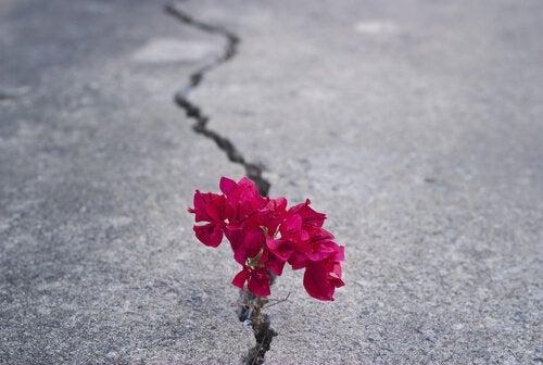 Siła charakteru - kwiat na asfalcie