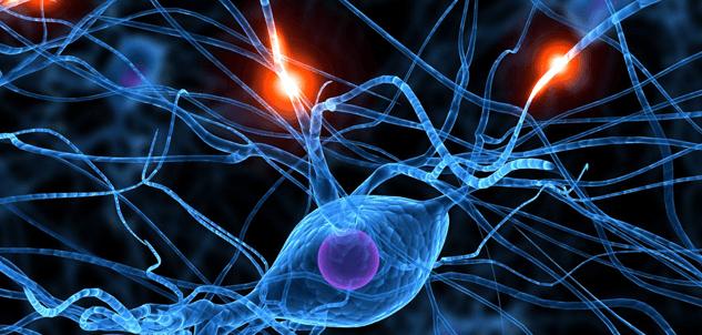 Sieć neuronów, sygnał bólu