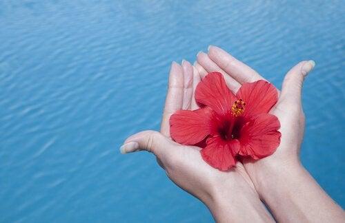 Czerwony kwiat na dłoniach