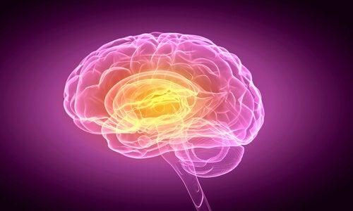 mózg odpowiedzialny za podejmowanie decyzji