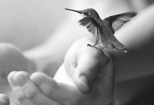 Koliber na dłoni