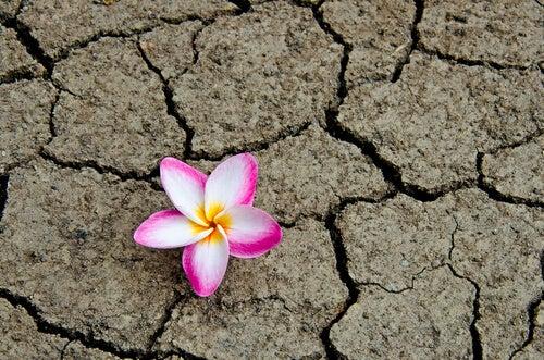 Kwiat na pystyni