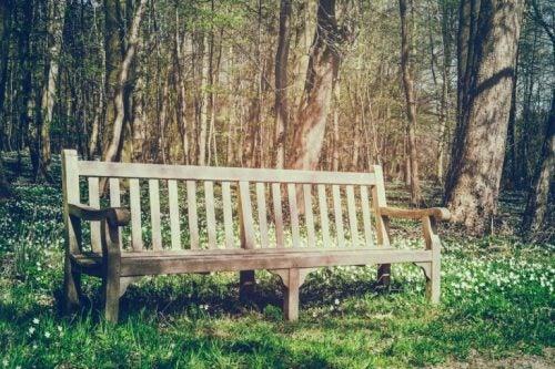 Drewniana ławka w parku