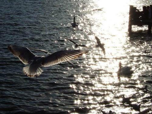 Ptak morski