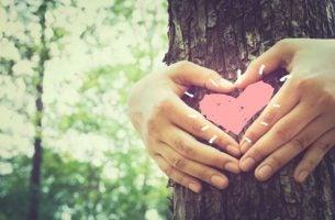 Serce drzewo