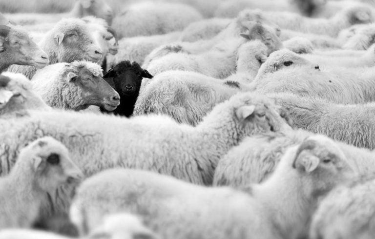 Czarna owca w rodzinie - jak układają się wzajemne relacje