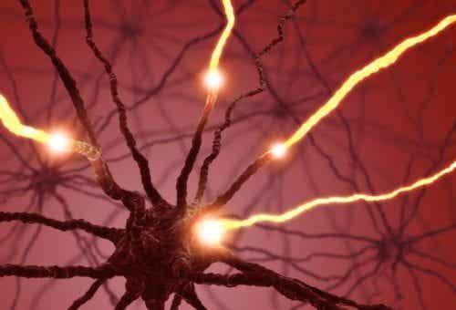 Serotonina - czy wiesz, jak wpływa na Twoje ciało?