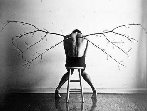 połamane skrzydła z gałęzi