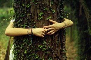 Lecznicze drzewa według Tao - siła natury - Piękno umysłu