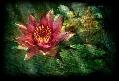 kwiat lotosu
