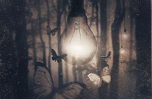 Ćmy lgnące do światła