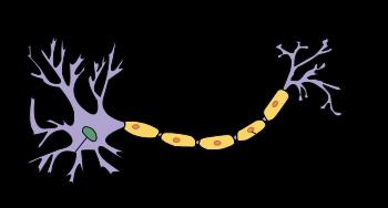 Budowa neuronu