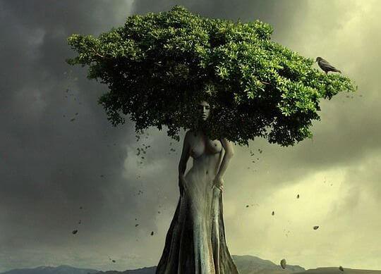 kobieta przemieniona w drzewo