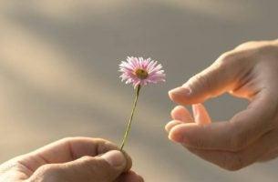 Kwiat trzymany w dłoniach