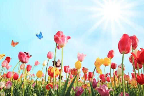 Kwiaty i słońce