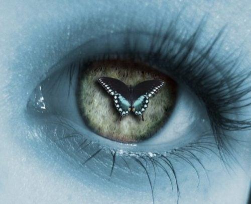 Motyl na oku