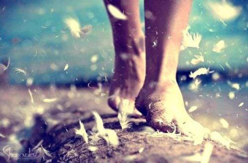 Nogi i latające wokół nich piórka