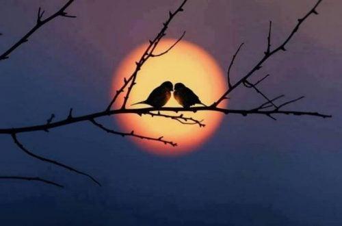 Dwie ptaszki na gałęzi