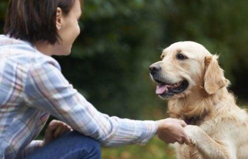 Pies daje łapę - psy to przyjaciele