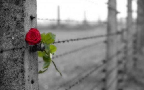 róża w drucie kolczastym - ból po utracie