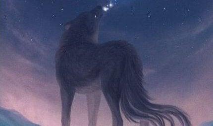 wilk w nocy