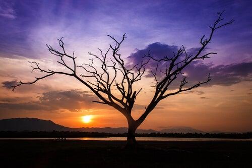 Drzewo o zachodzie słońca.
