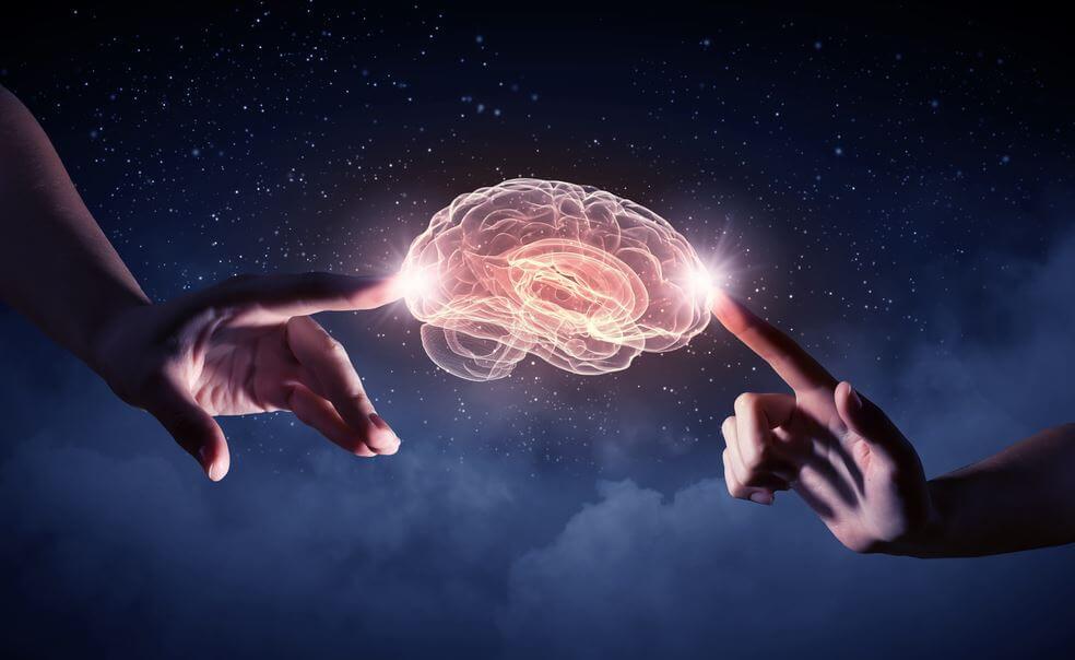 Dwie dłonie dotykają mózgu
