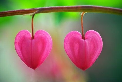Kwiaty serca.