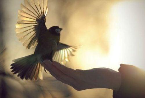 Ptak siedzący na dłoni człowieka