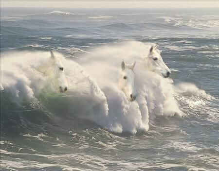 Konie wychodzące z morskiej fali
